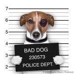 HAHD_mugshot-dog