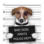 HAHD_mugshot-dog