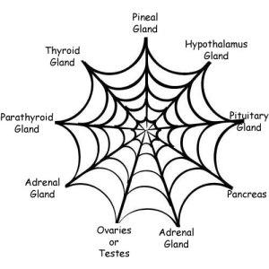 HAHD_Web