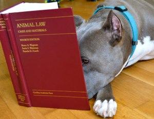 hahd_animal-law