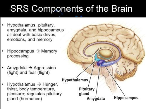 HAHD_SRS_Brain