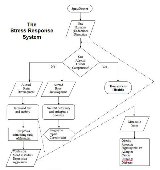 HAHD_Stress_Response_System